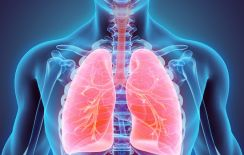 Istock-lungs