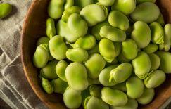 Istock-fava beans
