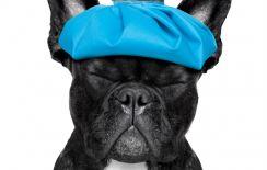Istock migraine